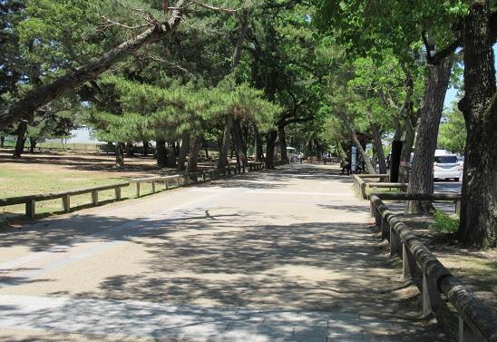 奈良公園の画像